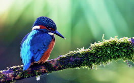 Amazing Blue Bird