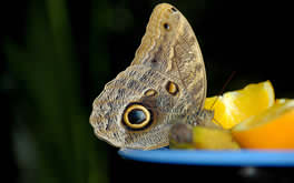 Free Butterfly Pic