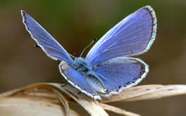 Free Butterfly Picture