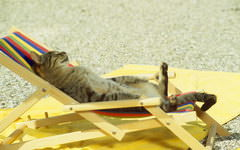 <h1>Sunbathing Cat Wallpaper</h1>
