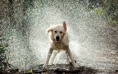 Dog Splashing