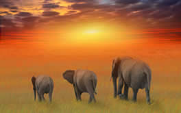 Amazing Elephant Family Wallpaper