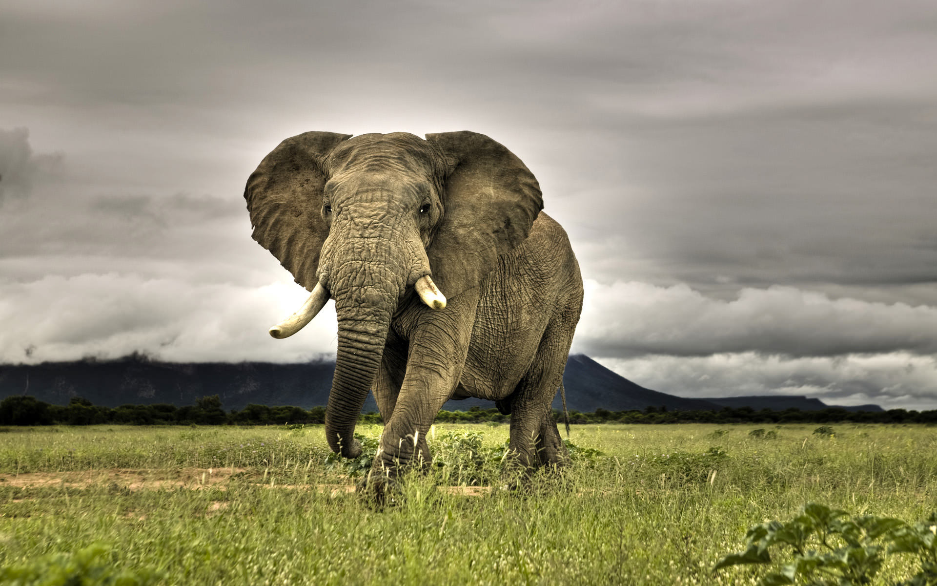 Amazing Elephant Wallpaper 1920x1200.