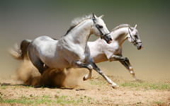 <h1>Amazing White Horses Background</h1>