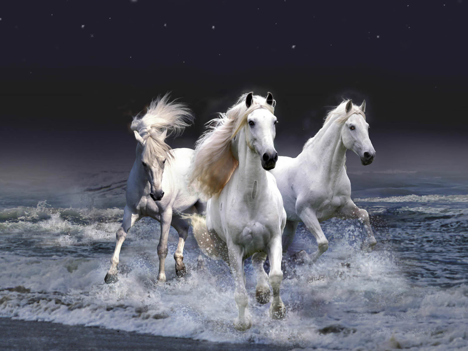 Beautiful White Horses Wallpaper 1600x1200