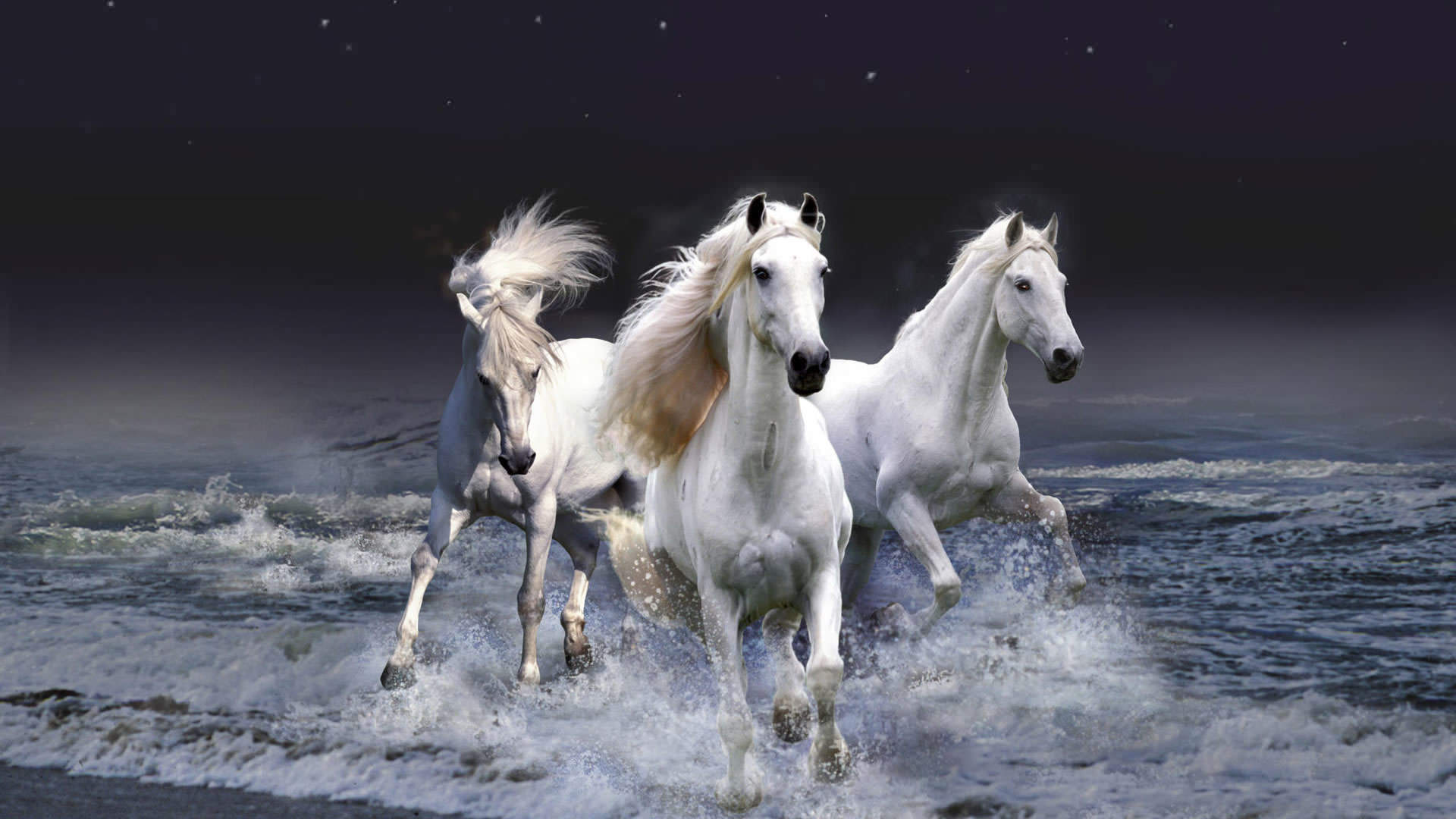 White running horses - photo#43