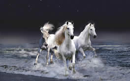 Beautiful White Horses Wallpaper