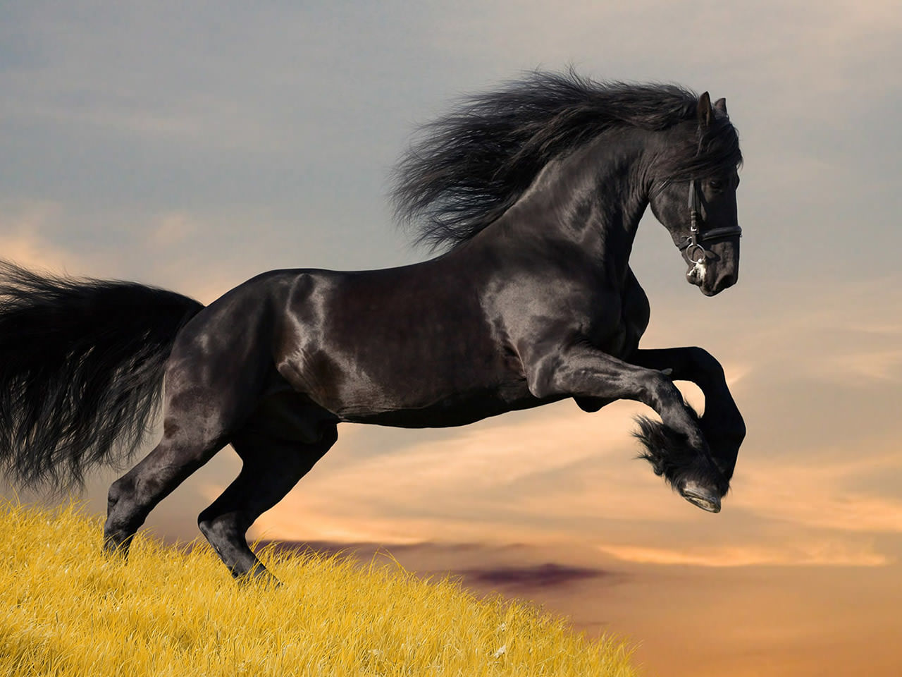Black Horse Wallpaper 1280x960