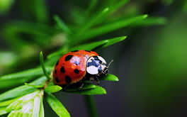 Lady Bug Image