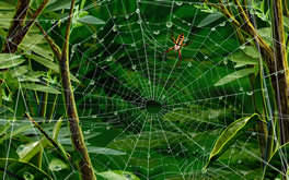 Hires Spider And Its Web