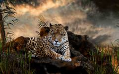 Majestic Leopard Wallpaper