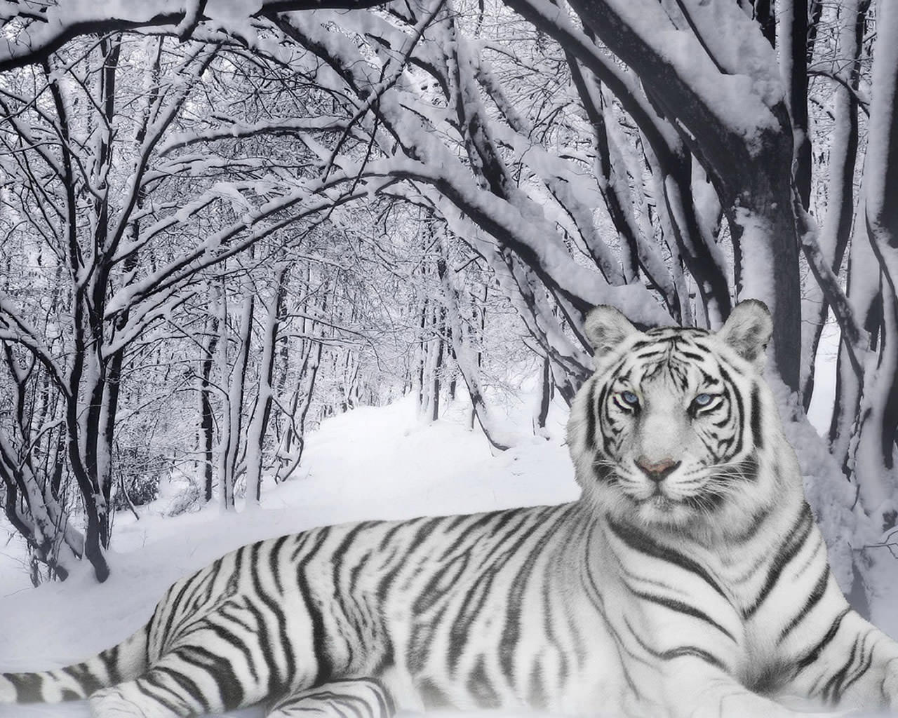 Awesome Snow Leopard Wallpaper 1280x1024
