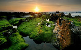 Green Landscape Wallpaper