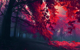 Red Forest Wallpaper