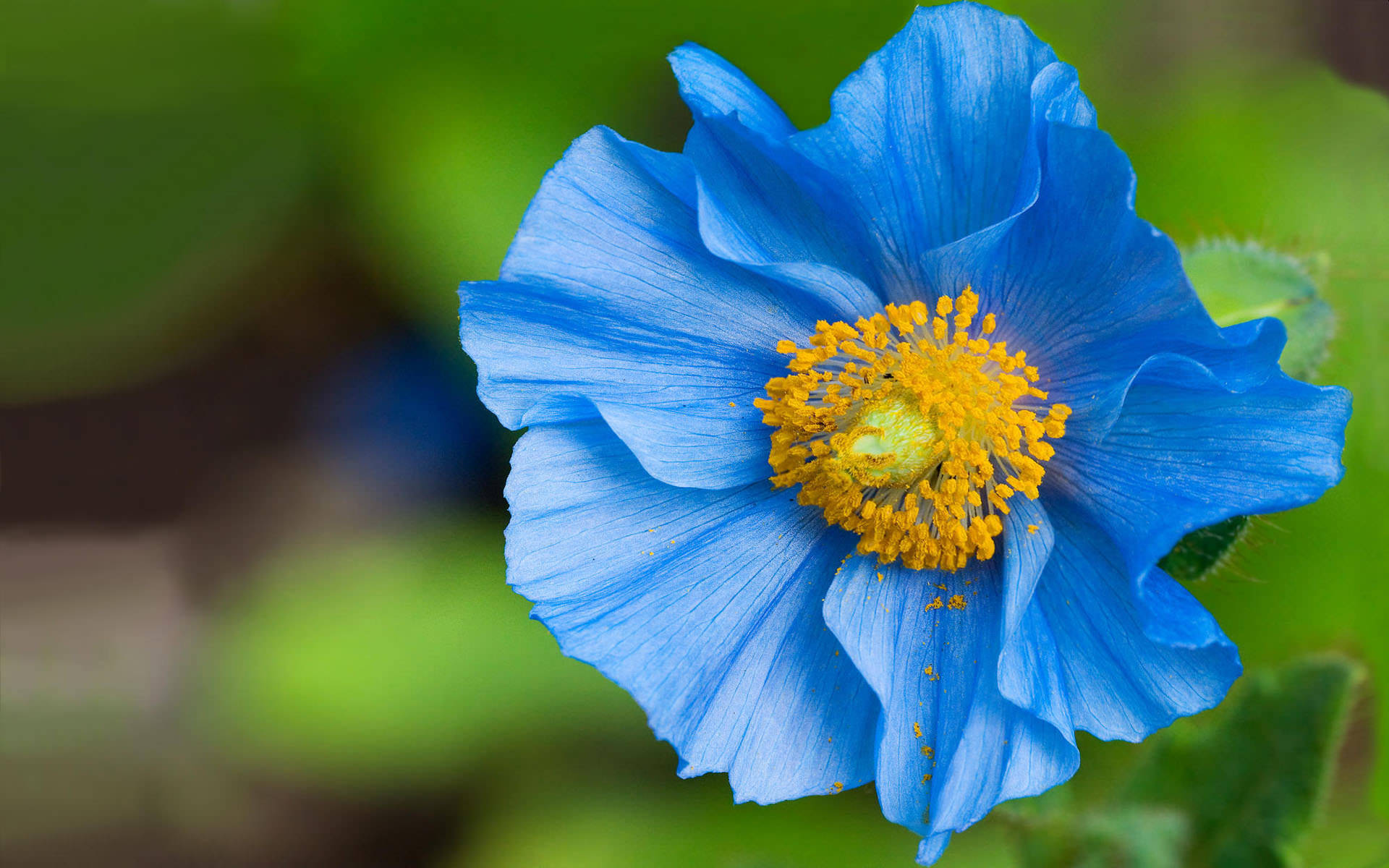 blue flower wallpaper 175773