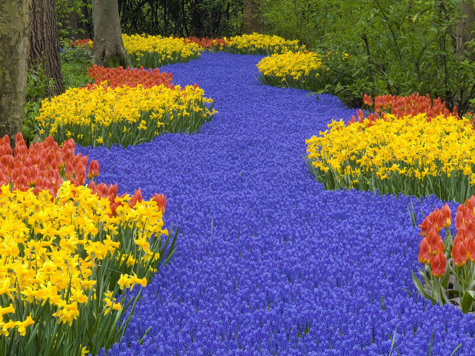 Amazing flower garden 1600x1200 for Amazing flower gardens