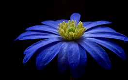 Blue Flower In The Dark