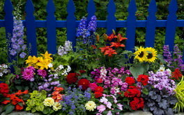 Flowers Along A Fence
