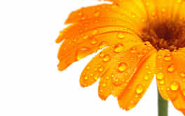 Orange Flower Picture