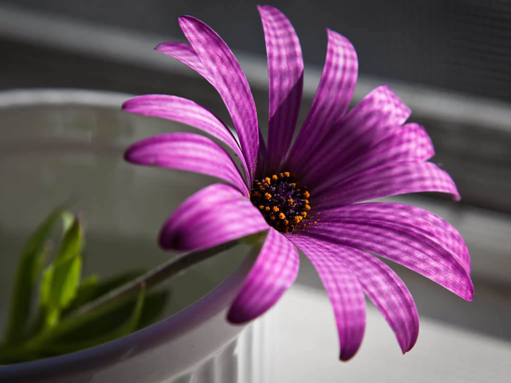Purple Flower Wallpaper 1024x768