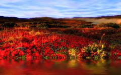Red Flowers River