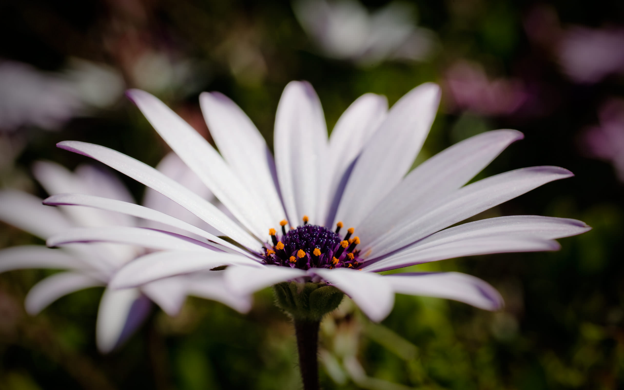 White Flowers Wallpaper 2560x1600