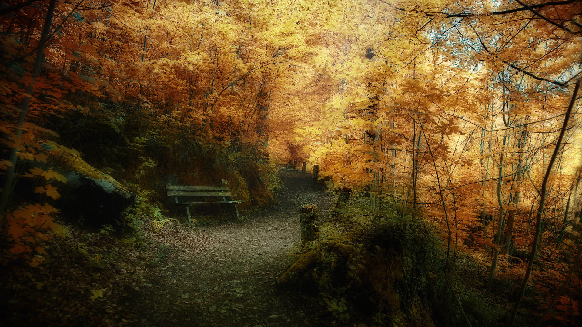 Wallpapers autumn wallpaper leaves nature background 1920x1080