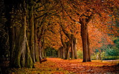 <h1>Autumn Scenery Background</h1>