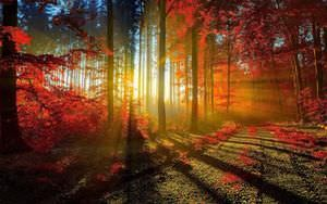 Autumn Sunrays