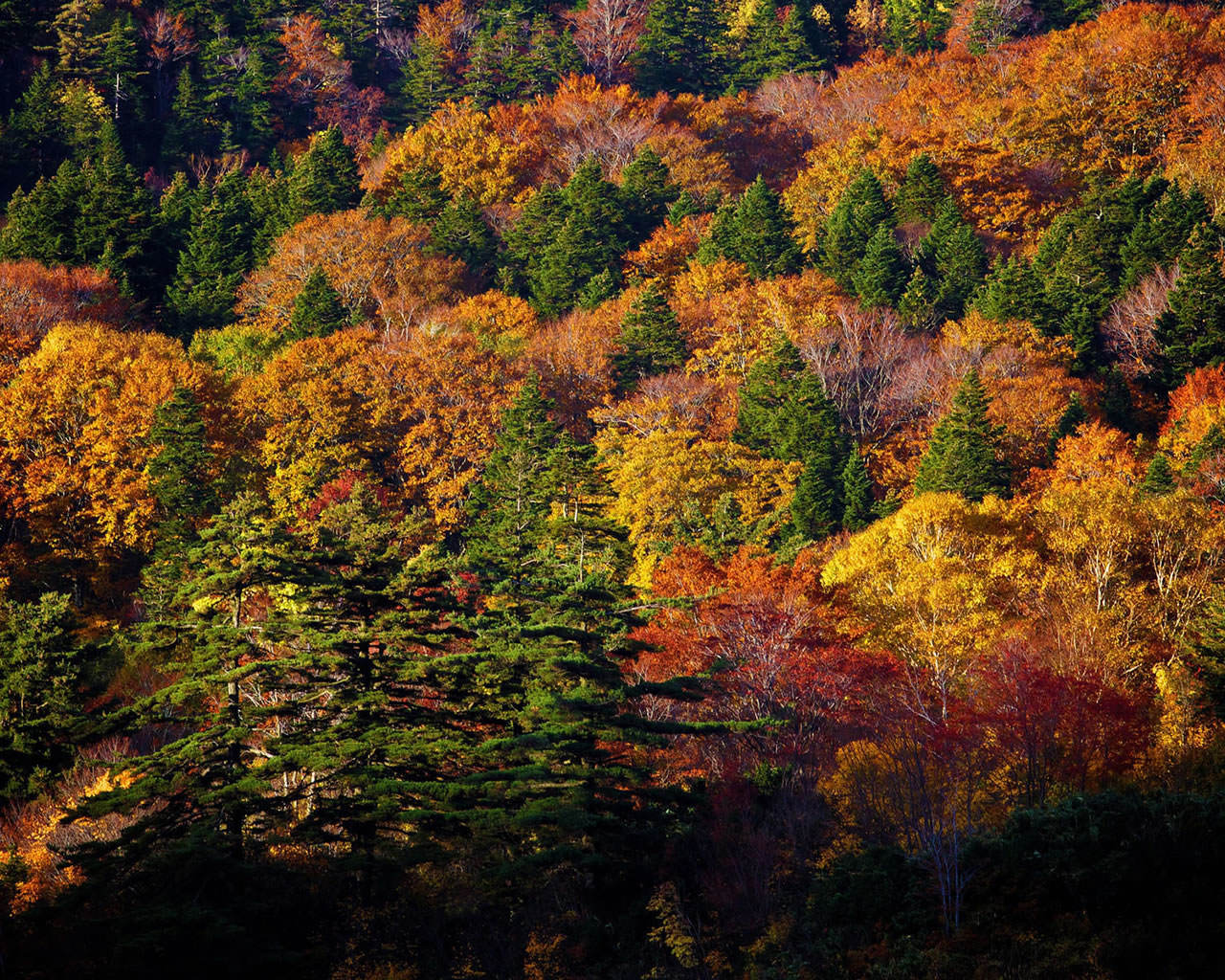 Autumn Trees Wallpaper 1280x1024