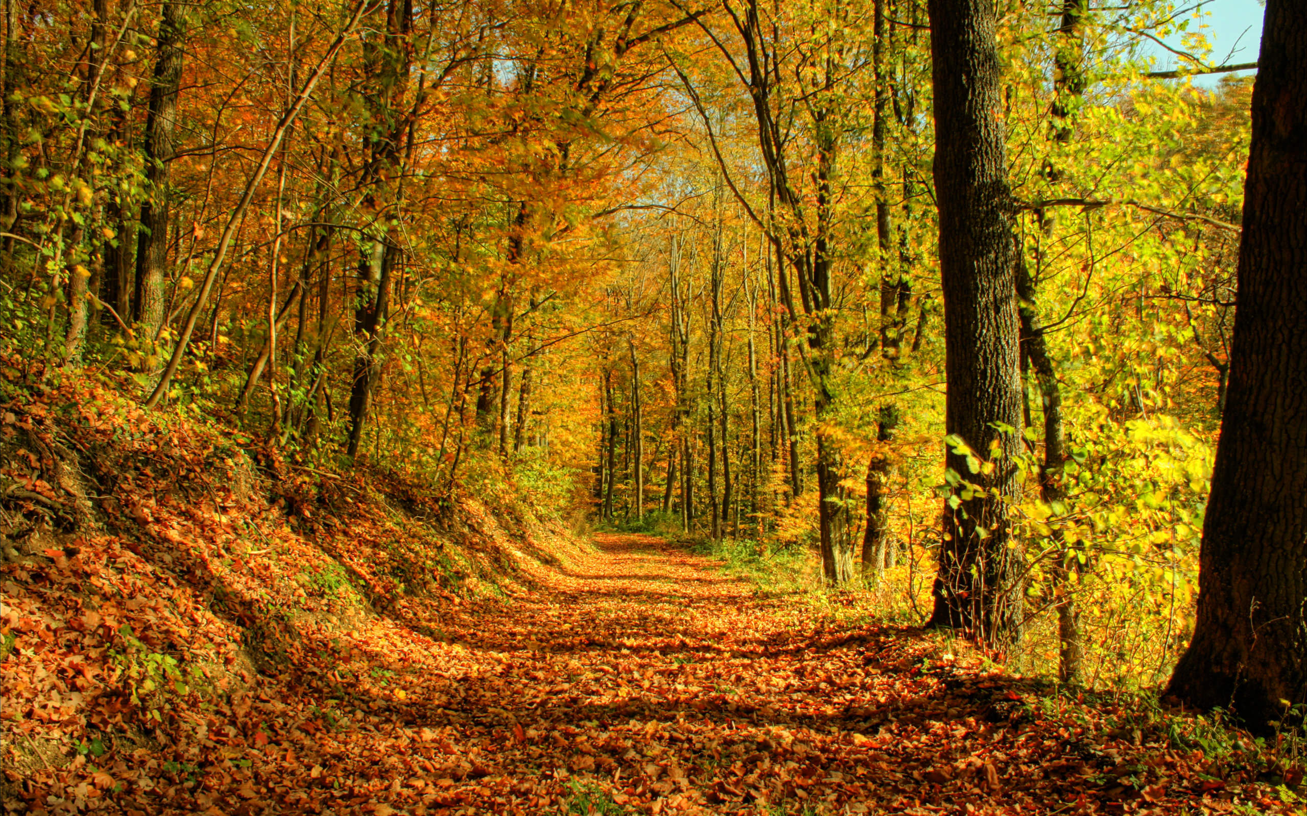 Forest path in autumn wallpaper - 1056458