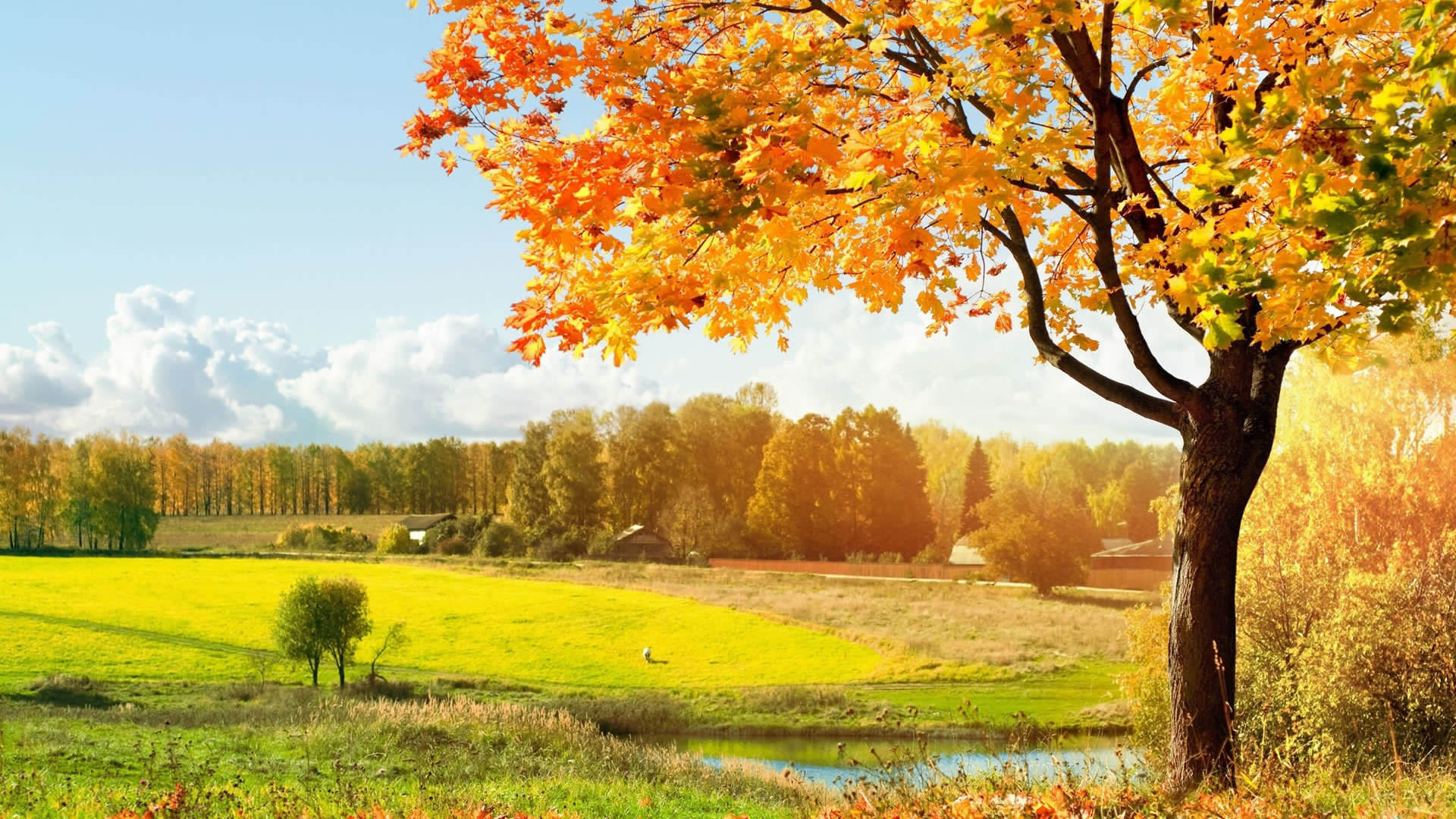 Beautiful Autumn Wallpaper 1920x1080