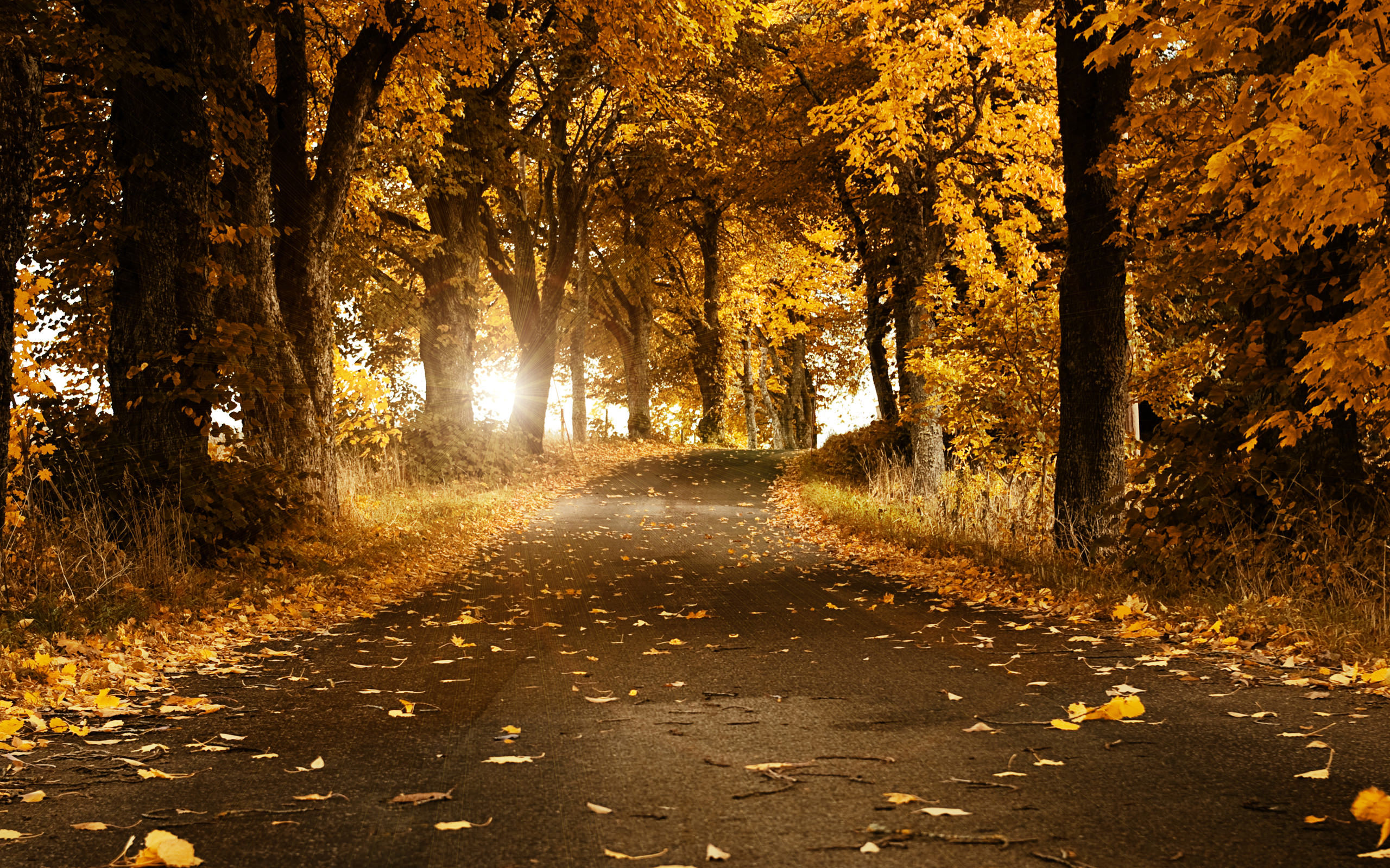 beautiful-autumn-wallpaper-2560x1600-1008098.jpg