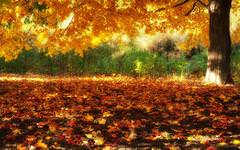 Autumn Wallpapers Free Autumn Desktop Wallpaper Desktop