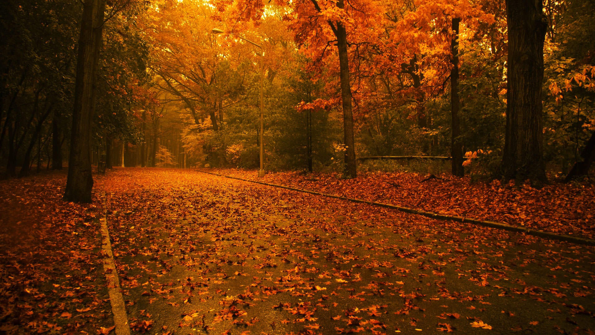com wallpapers nature wallpapers autumn wallpapers free fall