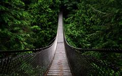 Bridge Into Forest