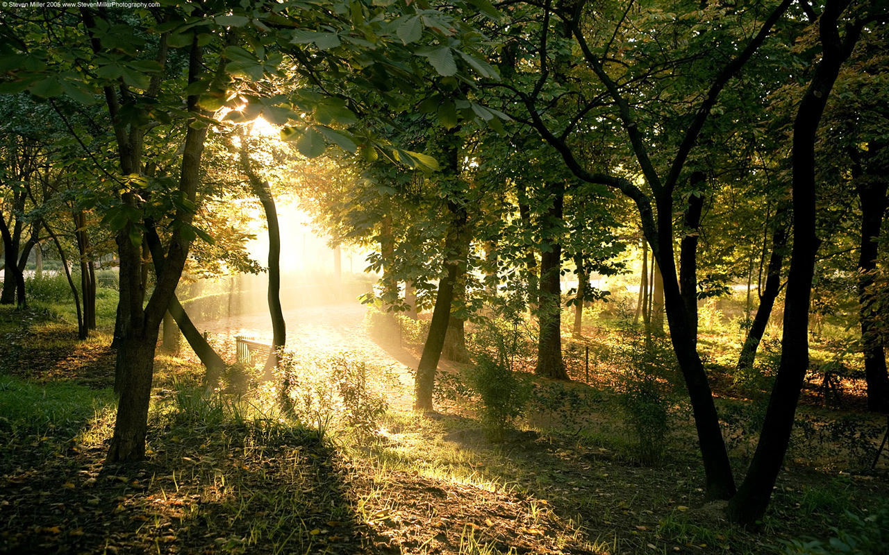 Forests Wallpapers 1280x800
