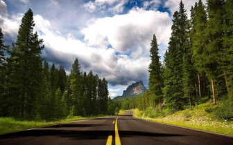 Road And Forest Background
