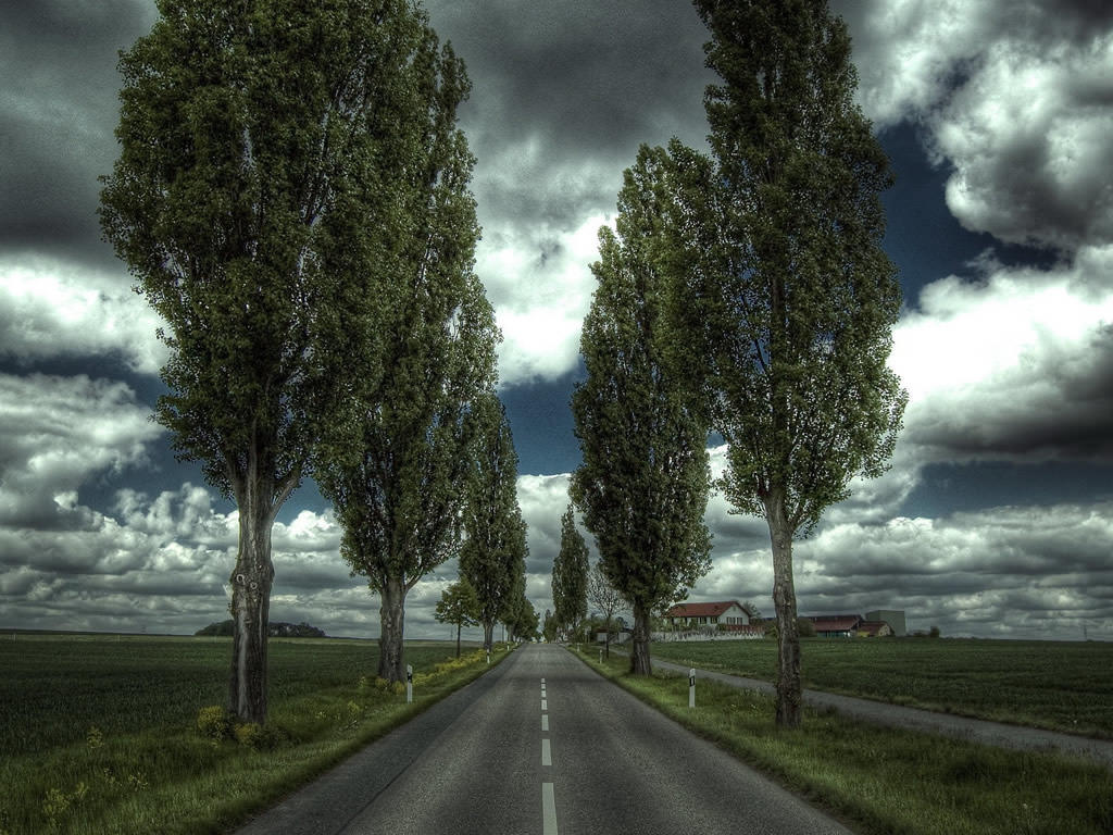Road Wallpaper 1024x768