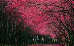 Amazing Blossom Trees
