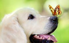Butterfly On Dogs Nose