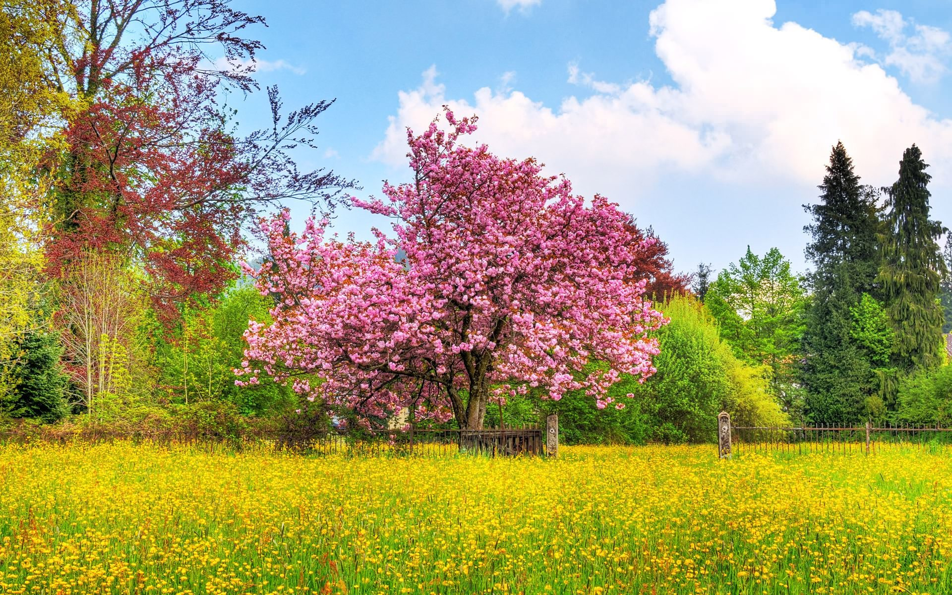 Beautiful Spring wallpaper 108591