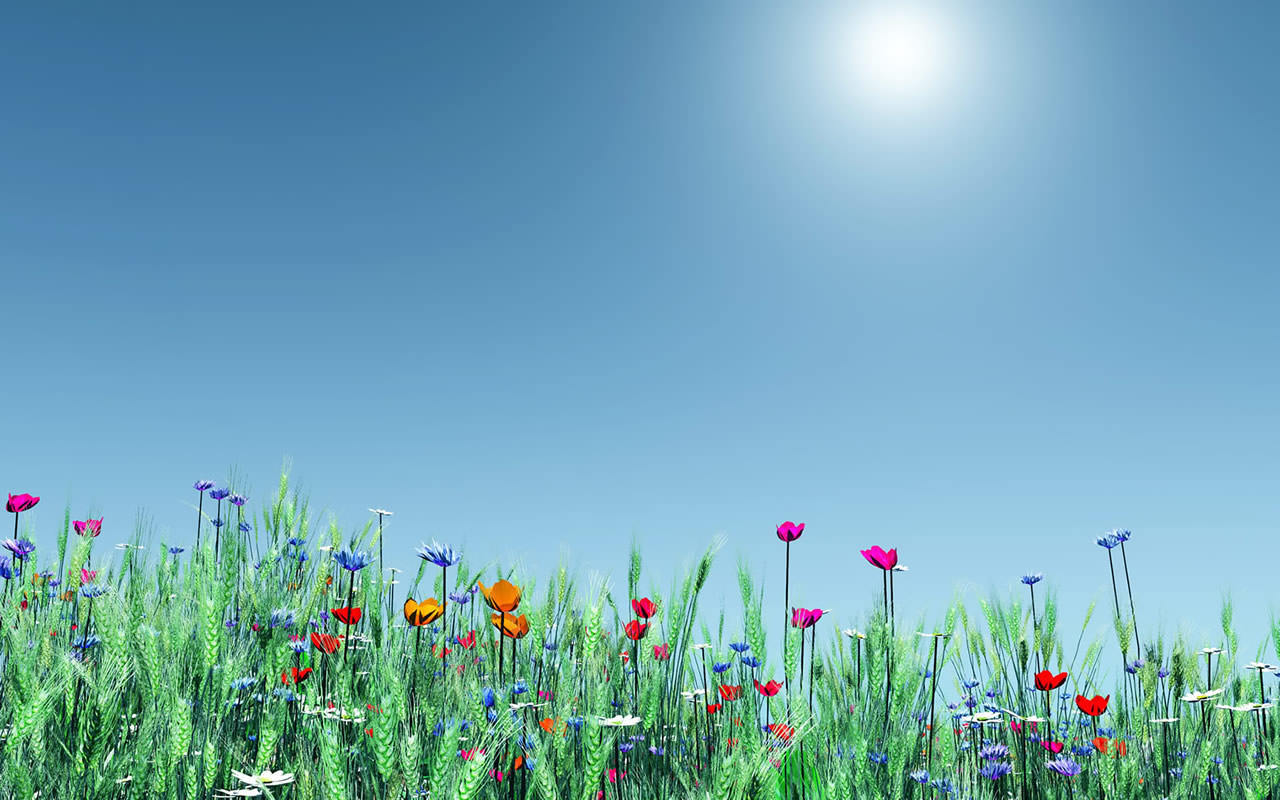 Spring Flowers Wallpaper 1280x800