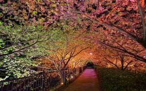 Spring Trees At Night