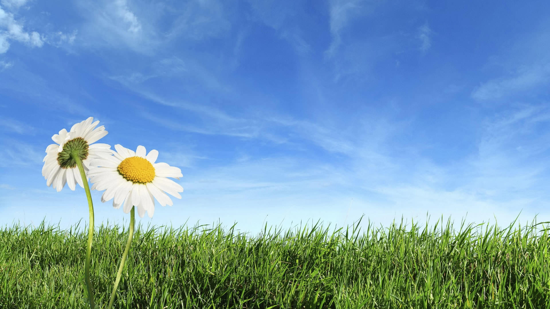 Spring Wallpapers, Spring Backgrounds, Spring Images - Desktop