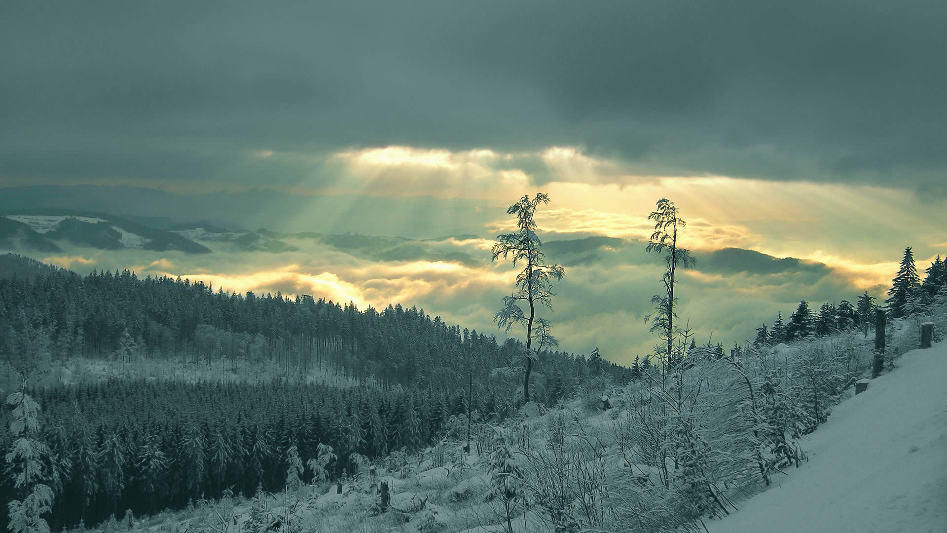 winter nature best wallpapers ever - photo #3