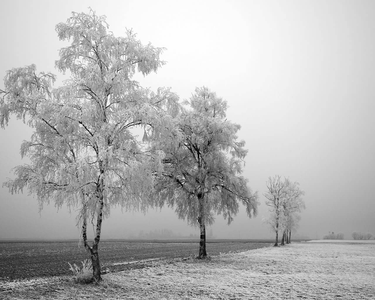 Black And White Winter 1280x1024