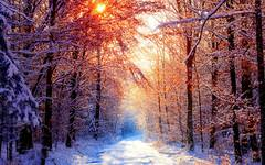 Sunset Winter Forest