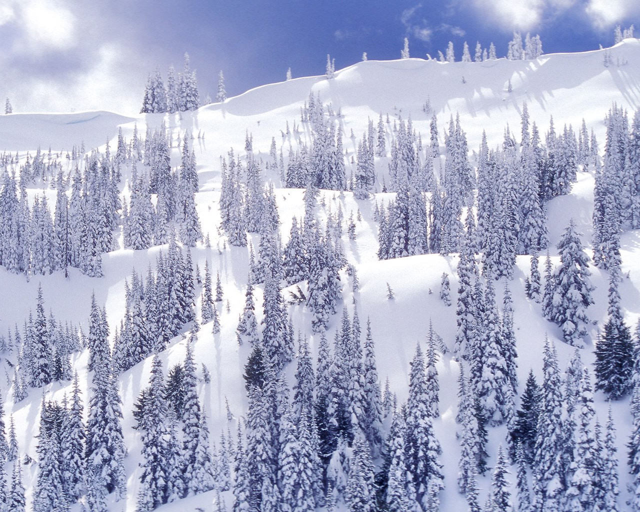 awesome nature wallpapers winter - photo #43