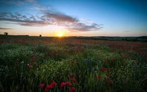 Sunrise Over Poppy Field